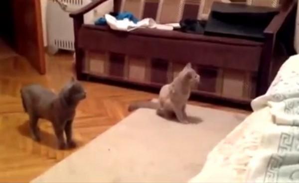 Кошки увидели привидение