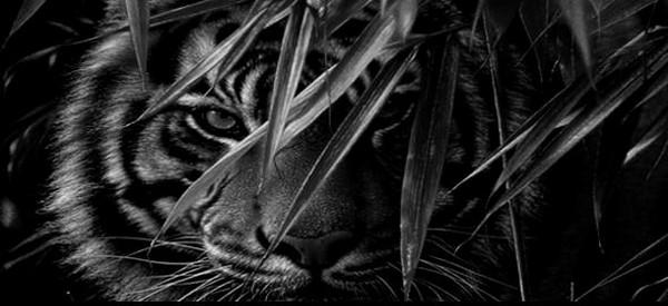 Наследие предков. Истории Александра Ивановича. История об охоте на тигра
